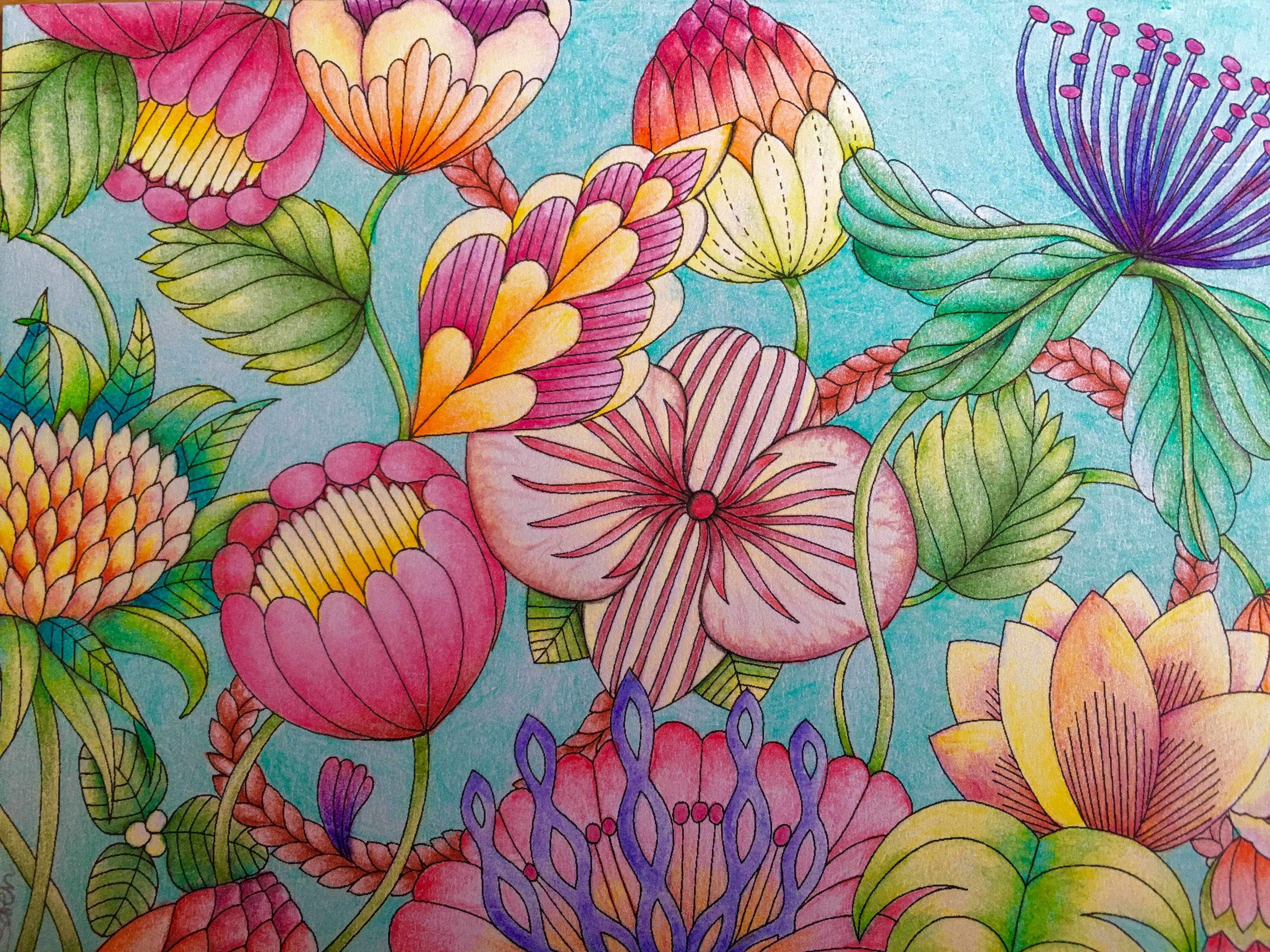 Millie Marotta Tropical Wonderland Flowers Postcard Lyra Rembrant Faber Castell Polychromos Colour Pencils