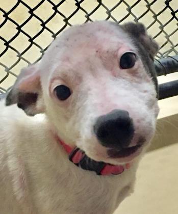 Adopt Princess on Dog adoption, Dogs, Adoption