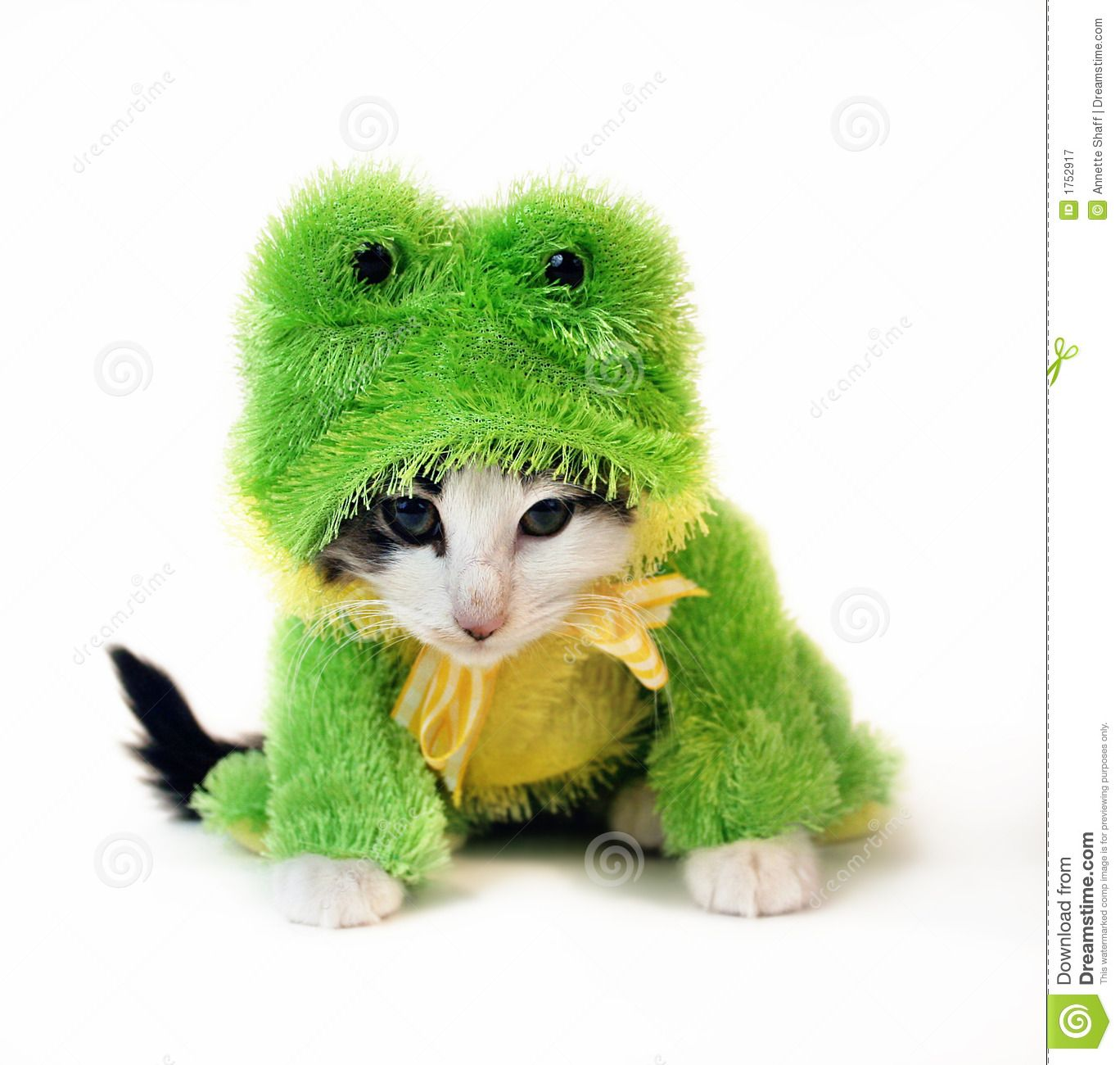 Cat Frog Kittens In Costumes Pet Costumes Cat Costumes