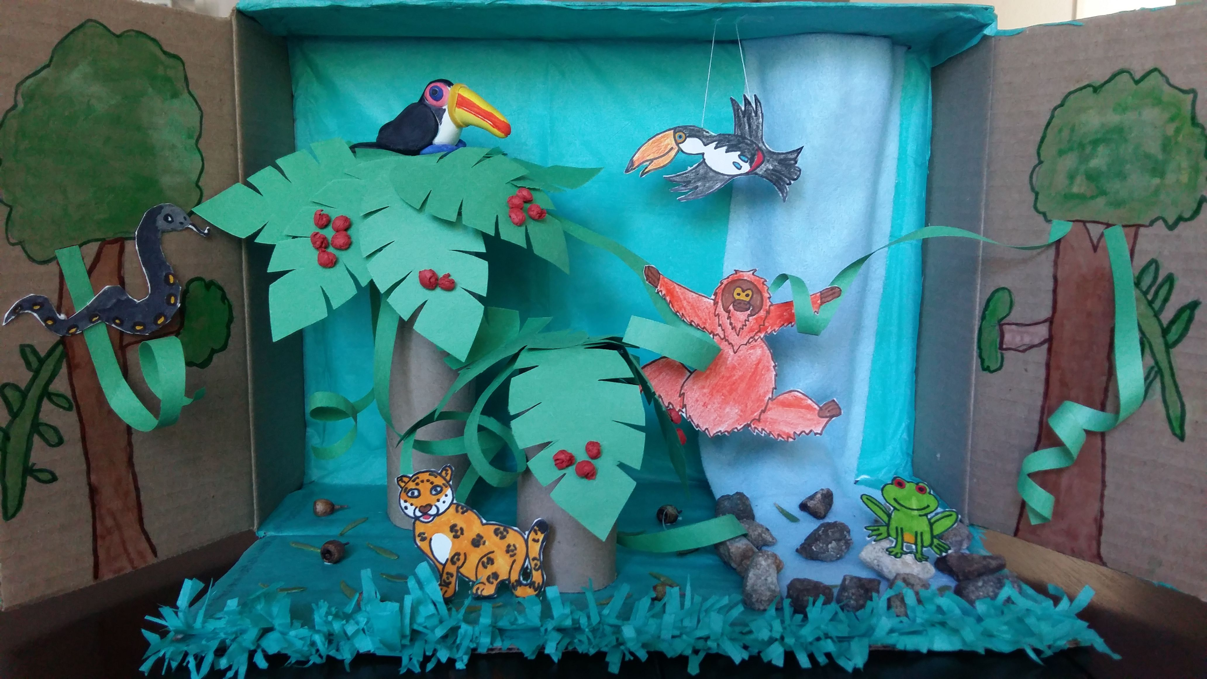 1st Grade Toucan Diorama With Rain Forest Set Up Diorama