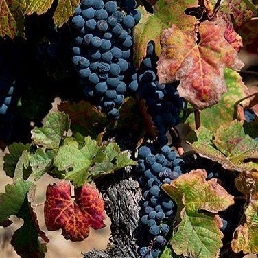 Alto Douro Vinhateiro #douro #douroriver #dourovalley #ilovedouro #dourovinhateiro #dourolovers #dourowine #portugal #portugal_lovers #portugal_de_sonho #portugal_em_fotos #portugaldenorteasul #igersportugal #ig_portugal #wine #vinho #travel #viagem #turismo #instatravel #visitportugal #worldheritage #worldheritagesite #patrimoniounesco #patrimoniomundial #patrimoniocultural #unesco #unescoworldheritage by borapraportugal