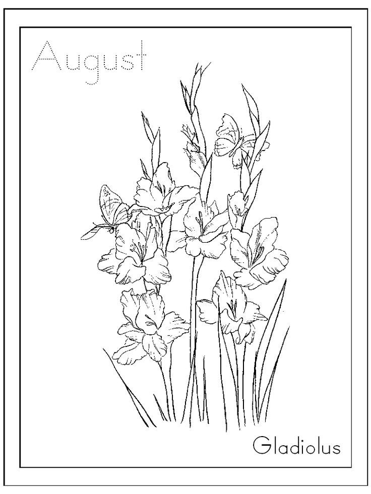 Flower Inkspired Musings August S Gladiolus Flower And Meanings Of Flower Coloring Pages Flower Drawing Coloring Pages