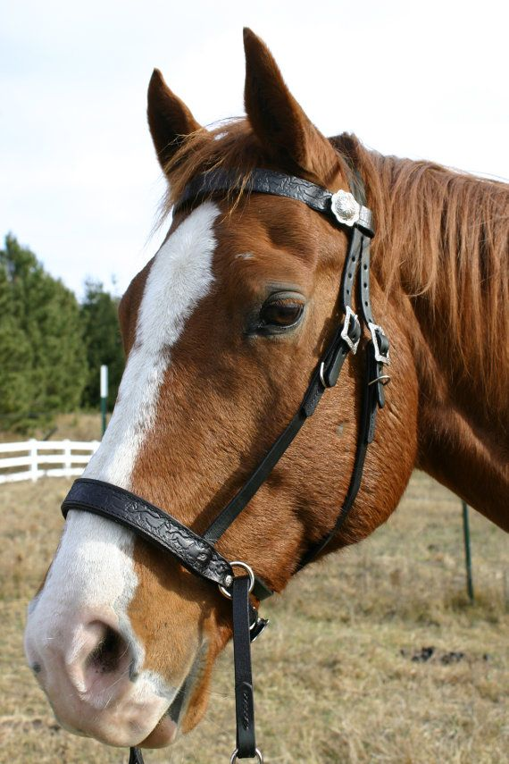 Black Bitless Bridle With Running Horse by JubileeBridles on