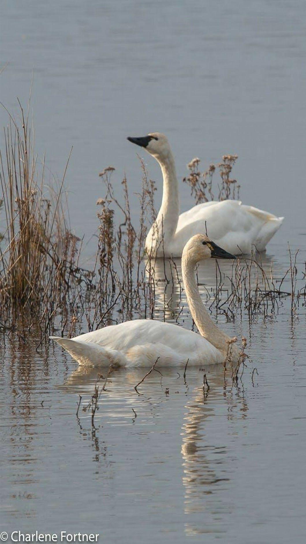 Photo SO SERENE!! 🐦 Beautiful birds, Bird life list
