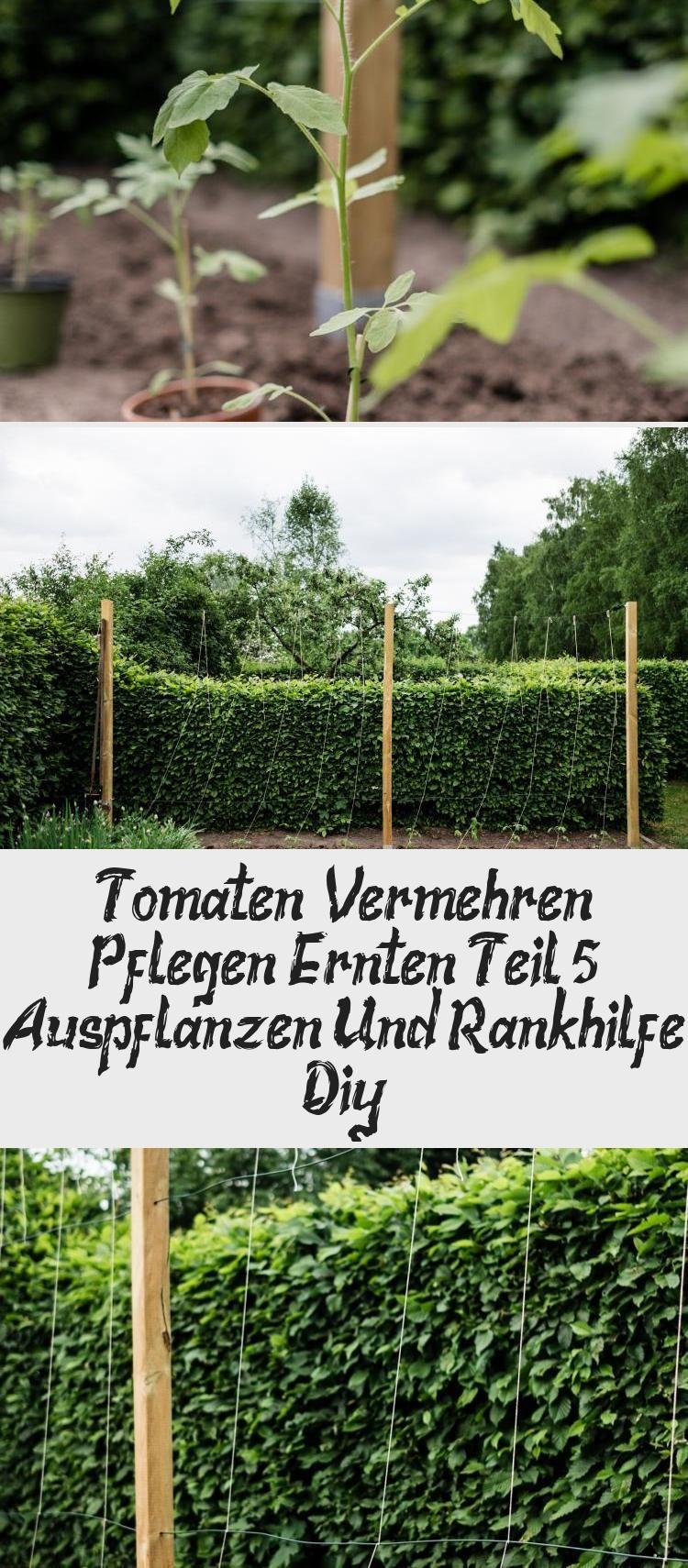 Tomaten Vermehren Pflegen Ernten Teil 5 Auspflanzen Und Rankhilfe Diy In 2020 Garten Plants Herbs
