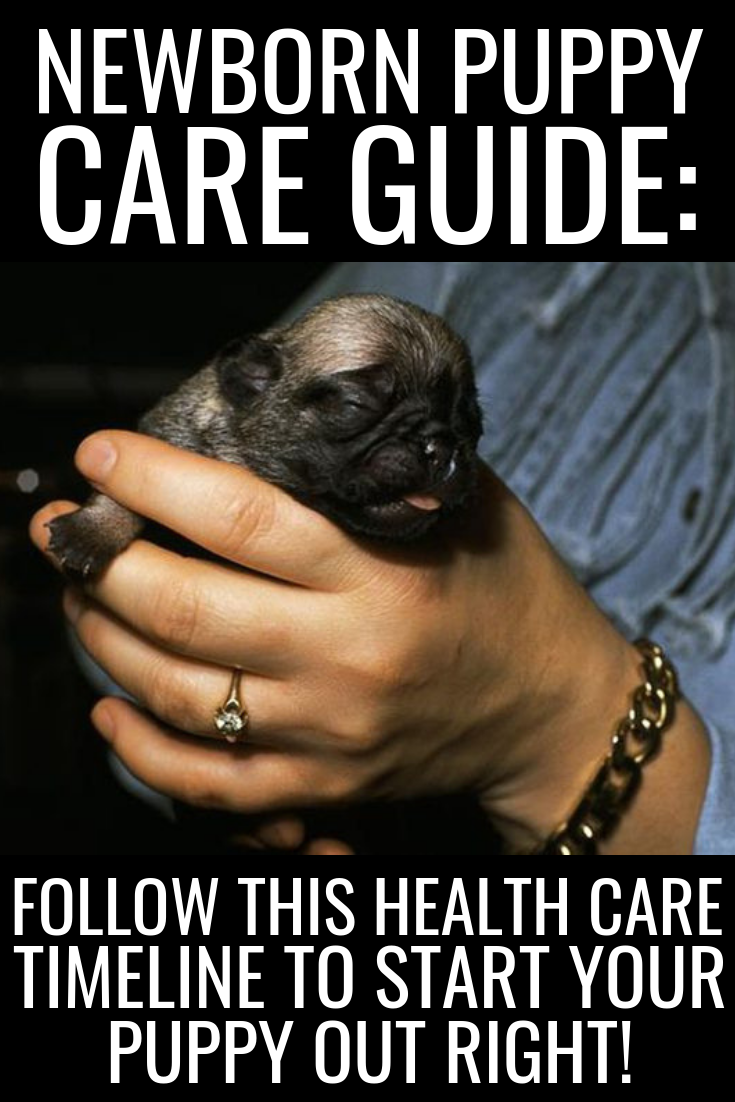Newborn Puppy Care Guide Follow This Health Care Timeline To Start