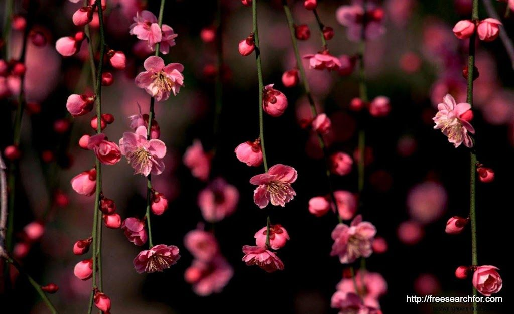 Desktop Wallpaper Hd 3d Full Screen Flowers 1 In 2020 Pink Flowers Wallpaper Flower Desktop Wallpaper Spring Flowers Wallpaper