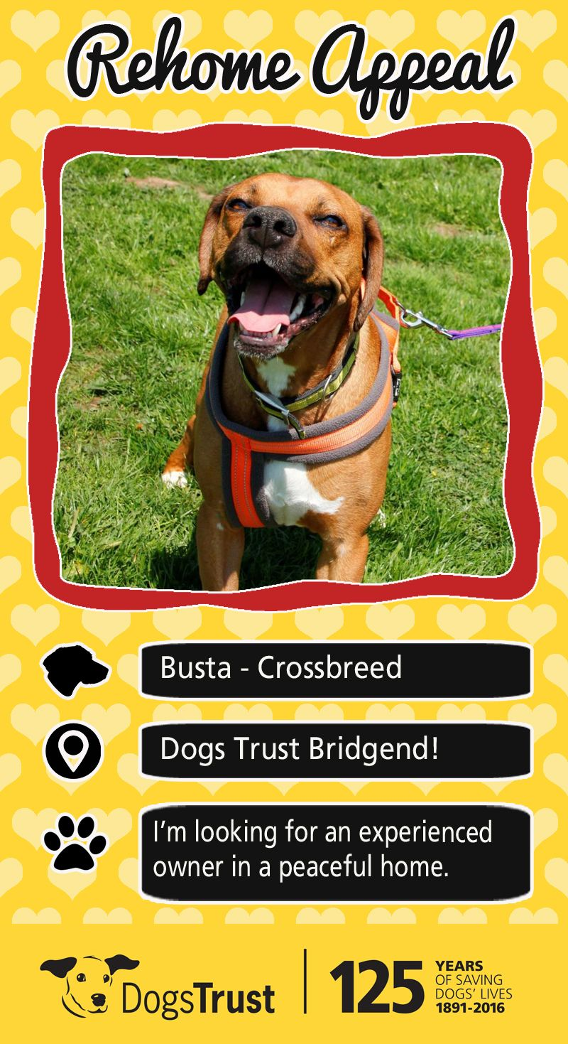 Hi I M Buster And I M A 5 Year Old Ridgeback Cross I Am A Really