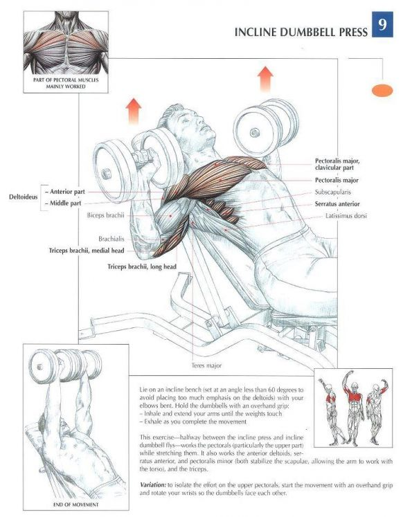 ANATOMY OF A WORKOUT - CHEST Workout. Join our community at https ...