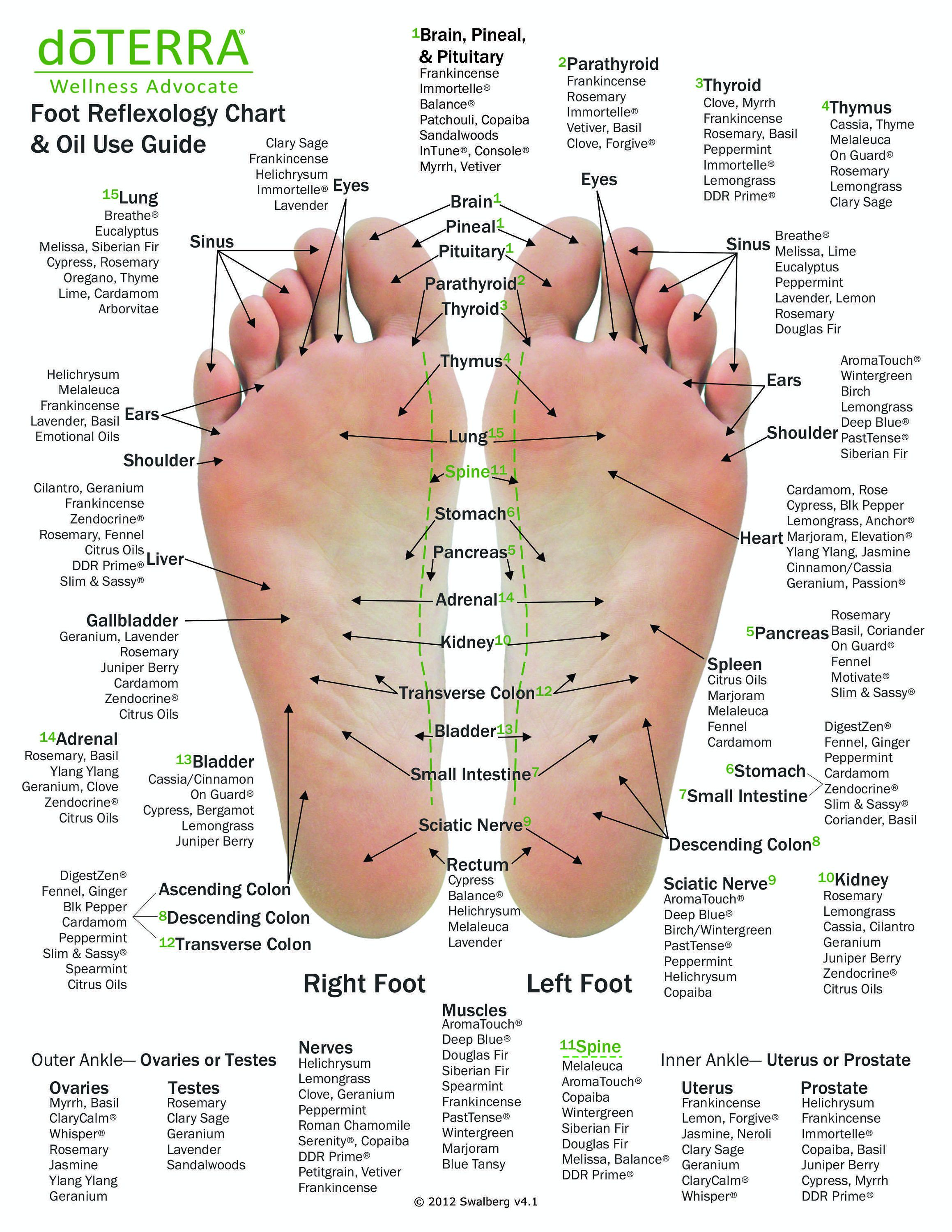 10 Pack Essential Oil Reflexology Chart Oil Use Guide 8 5 X 11 On 14pt Card Stock Reflexology Chart Reflexology Foot Chart Reflexology
