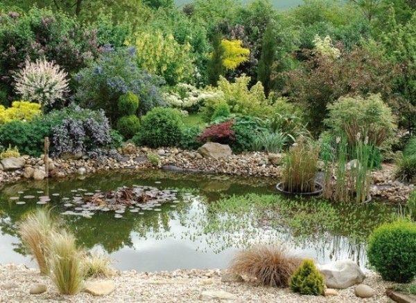 C mo mantener el estanque saludable en verano estanques for Como mantener el agua limpia de un estanque