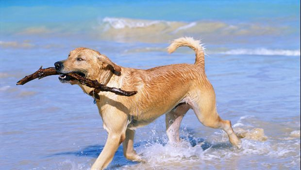 Did you know that it's critical to give your pup extra drinking water at the beach? Learn about this and more tips for keeping your pets safe during the summer.