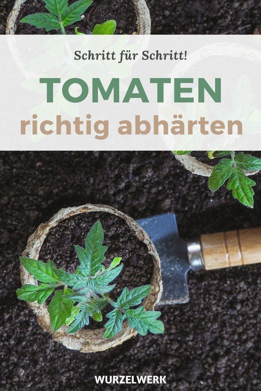 Tomaten Pflanzen Die Komplette Anleitung In 2020 Plants Tomato Plants Perfect Garden