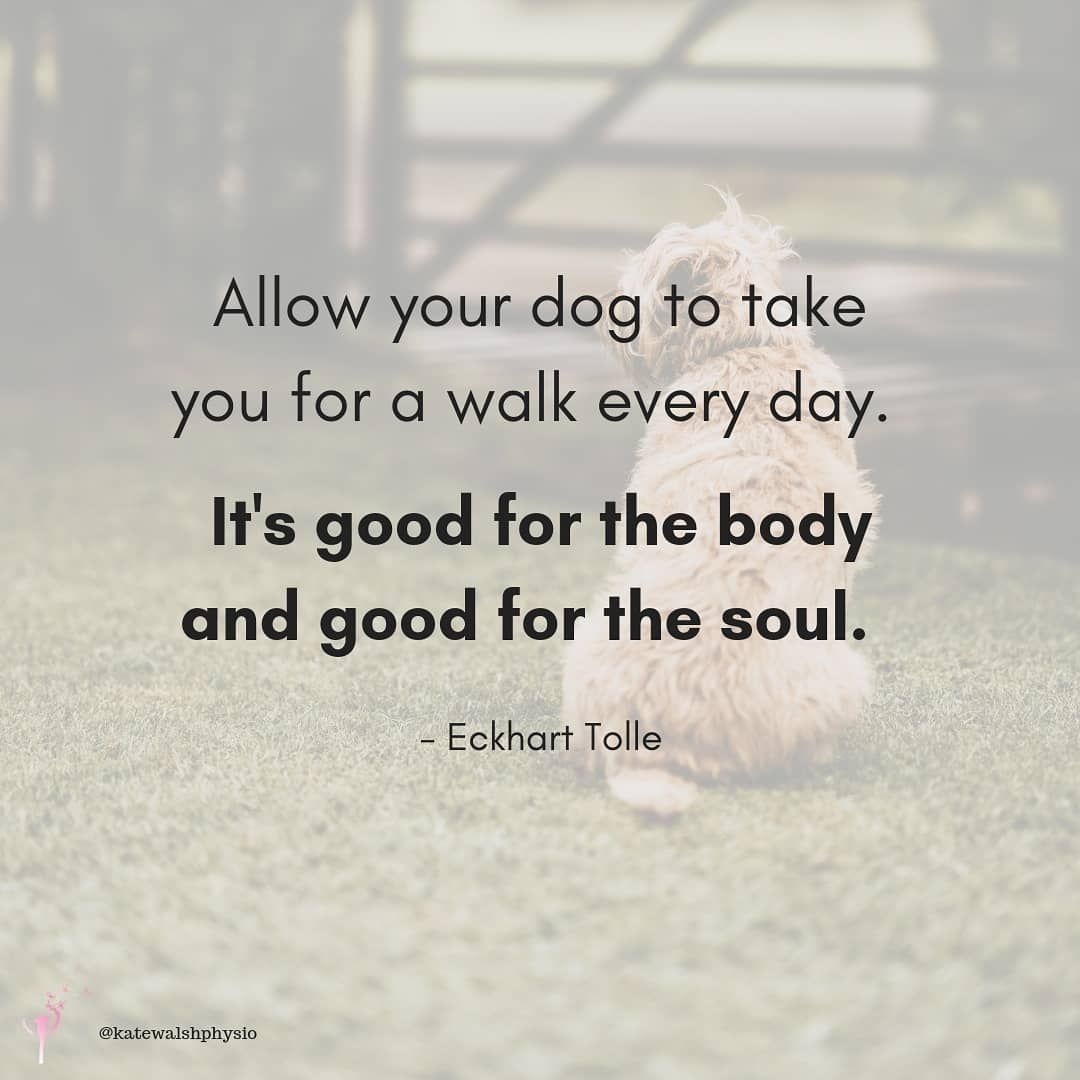 Lovely Dog Quote Dog Walking Quotes Dog Quotes Lovely Quote