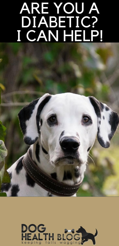 The Benefits Of Petting A Dog Dog Exercise Diabetic Dog Dog Training