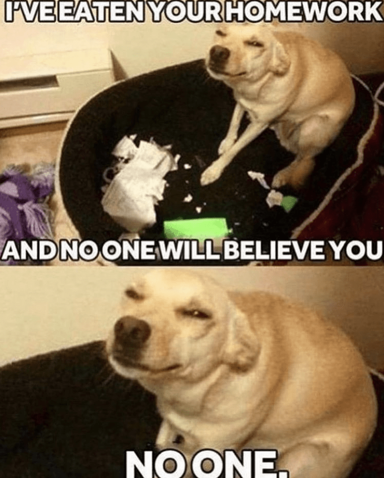 23 Spicy and Fresh Tail-Wagging Good Boi Doggo Memes
