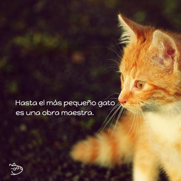 Frases De Gatos Mas De 60 Ideas Para Inspirarte Love Cats 3