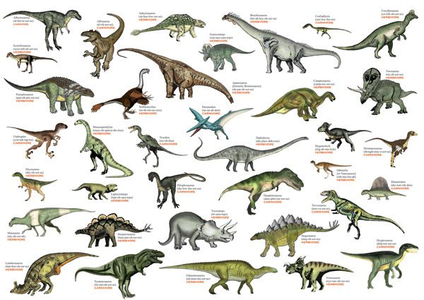 Dinosaurs And Other Related Creatures Dinosaur Pictures Dinosaur Illustration Dinosaurs Names And Pictures This list of dinosaurs is a complete listing of all dinosaurs genera that have ever been the list contains 1278 names, of which approximately 888 are considered either valid. dinosaur pictures
