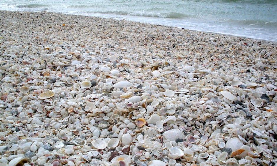 Sea Shell Tours Marco Island Fl