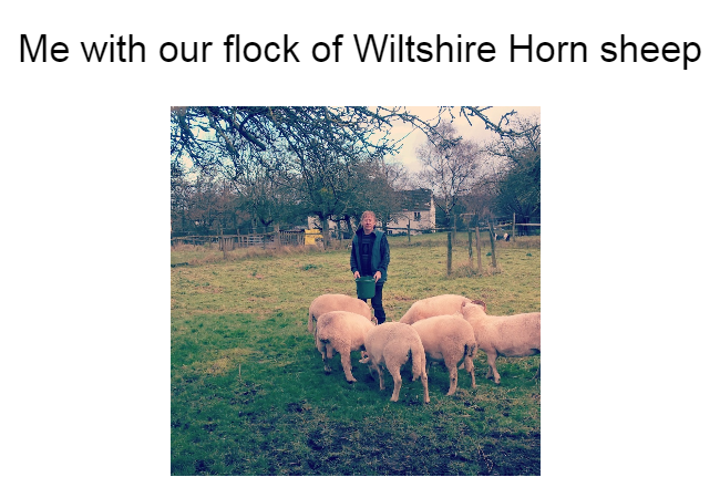 Flock of Sheep Me and our flock of Wiltshire Horn sheep