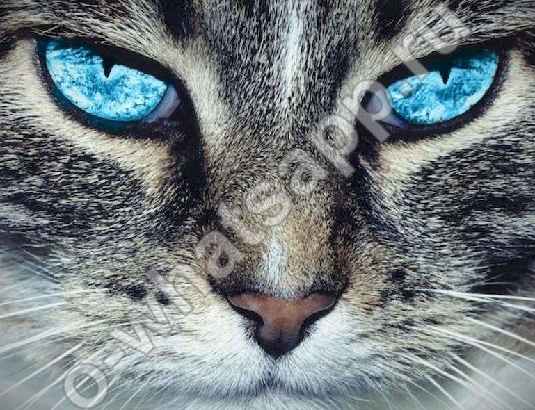 Котами, смешные картинки для аватарки ватсап