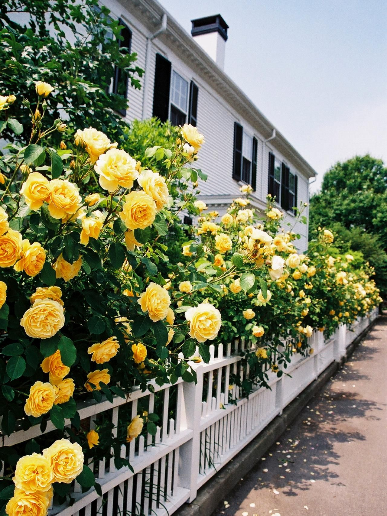 Love Garden Roses: Dream Home 2015: Around The Area