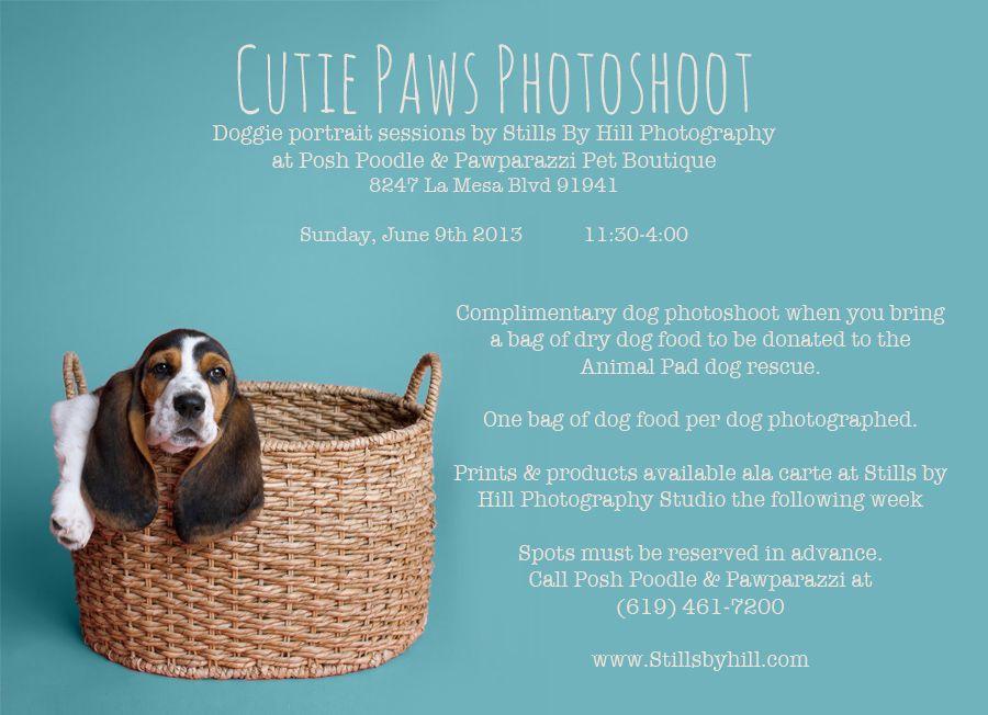 Doggie Portraits Coming Up At Posh Poodle Pawparazzi Pet