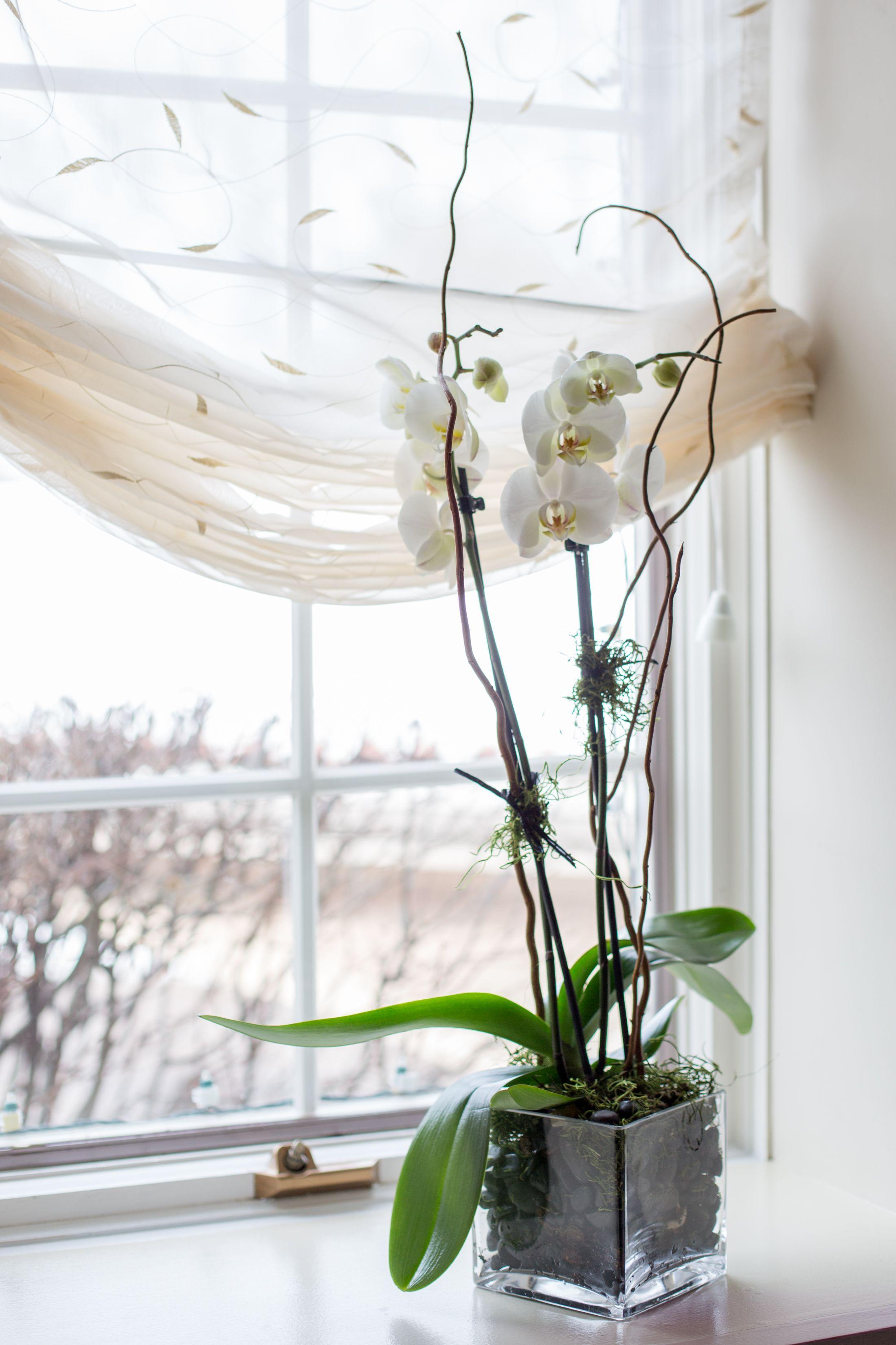 Potted Orchid Wedding Centerpiece | Idalina Bertone Floranext ...