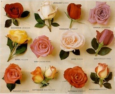 Different Color Varieties Of Roses Aligned With Each Month Of The