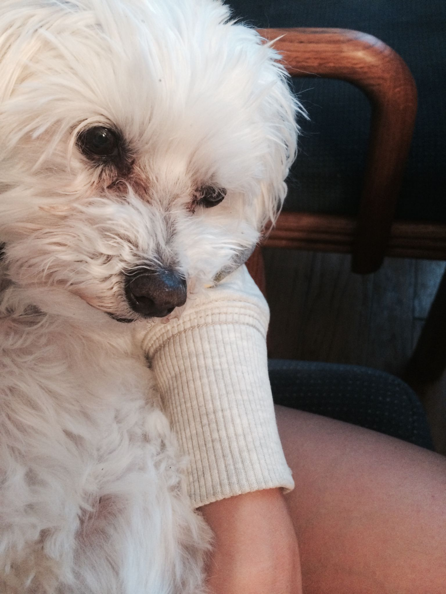 """Here is a picture of my little #dog Angel who, now, has truly become my Angel! #animals From mycurrentnewsblog.com Click to find out why he was called """"Nasty""""."""