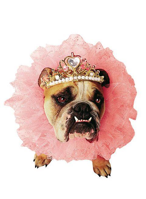 Königin Hundekostüm | Hundekostüme | Pinterest | Hunde, Hundekostüm ...