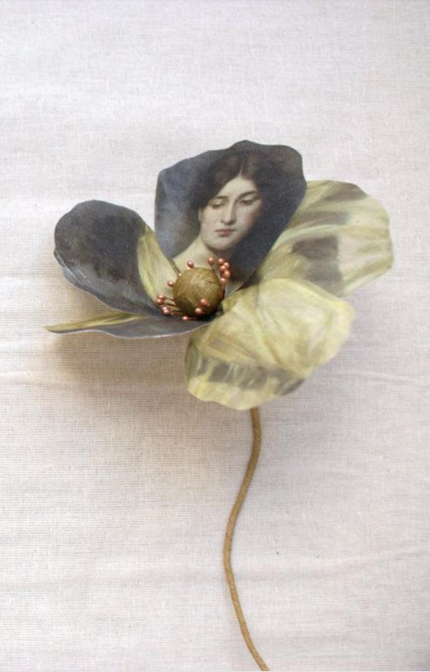 Pin by anthia koullouros on botanical love pinterest flower art