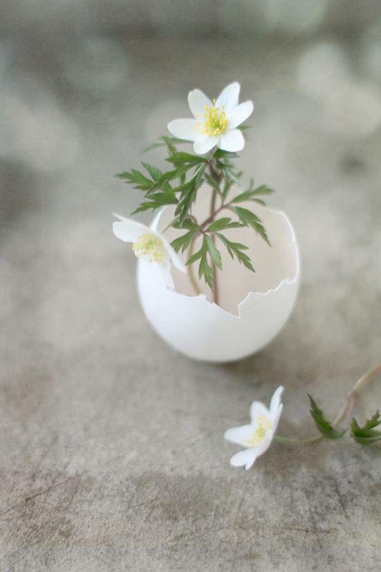 White flowers in egg vase
