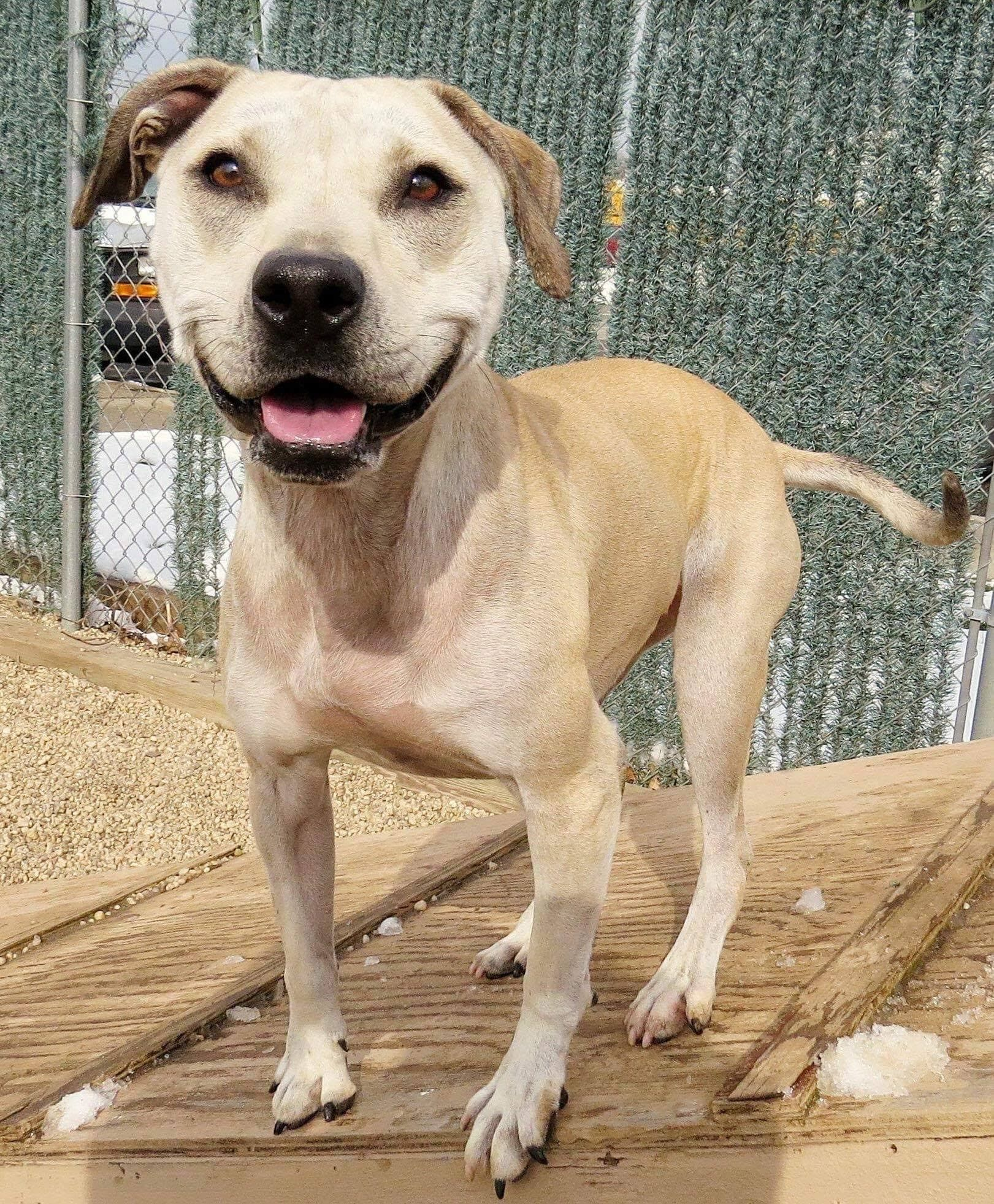Adoption central pets dogs up for adoption adoption