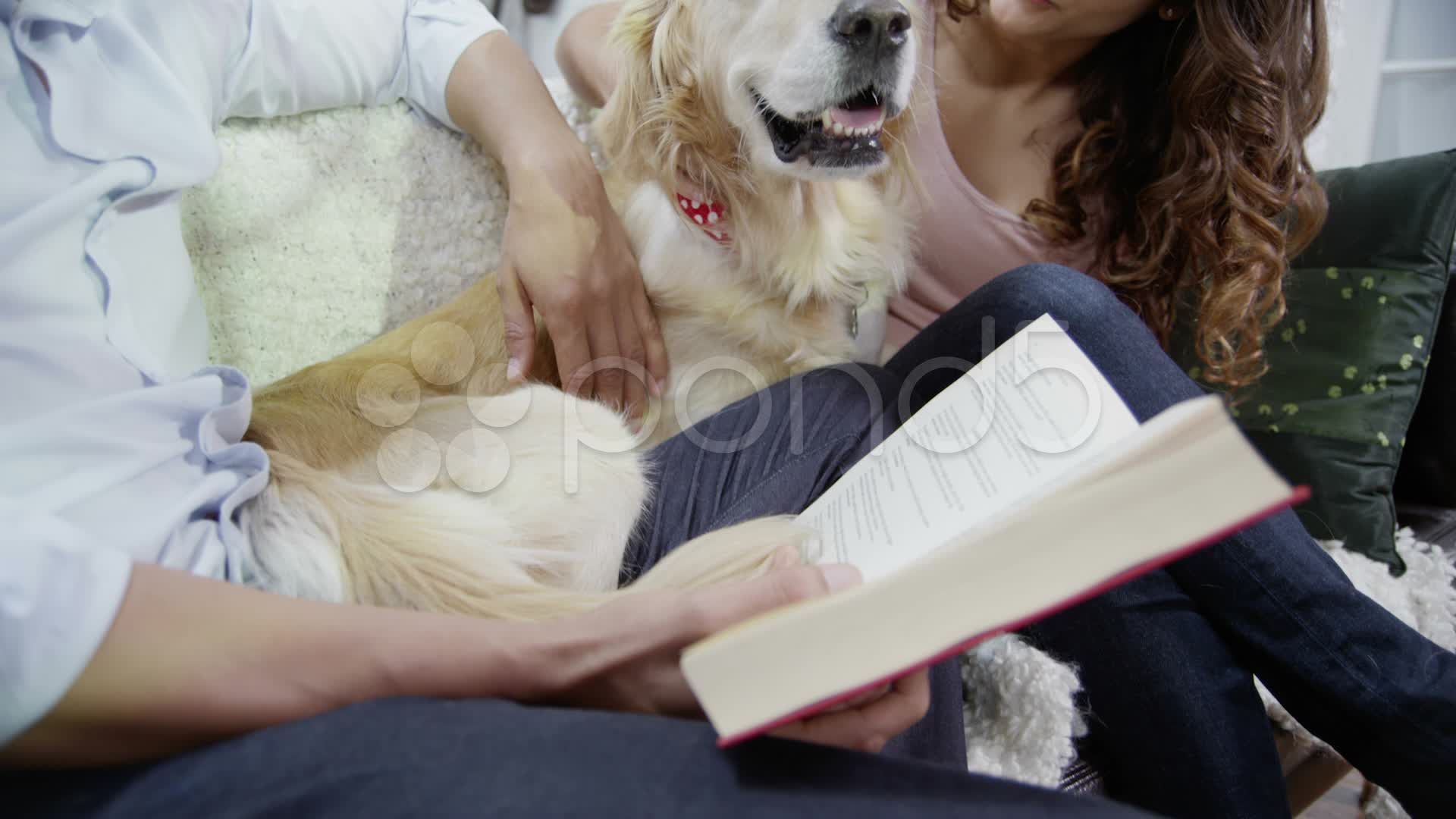 Young Couple Relaxing At Home And Cuddling Their Pet Dog Stock Footage Relaxing Home Young Couple Pet Dogs Cuddling Pets