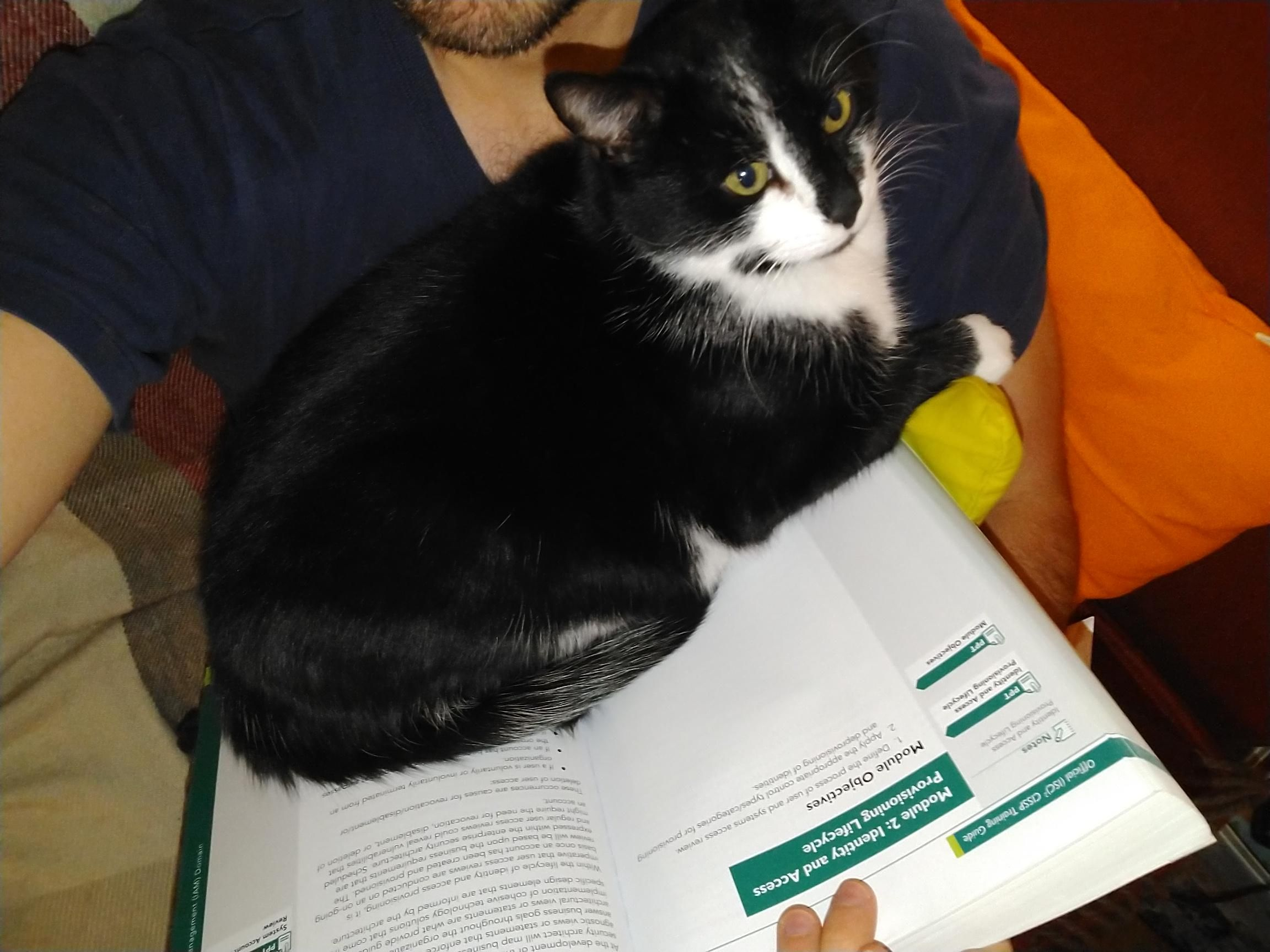 When You Re Trying To Study But Your Cat Decides You Are Giving To Much Attention To The Book Instead Of Him Cats Cats And Kittens Cat Photo