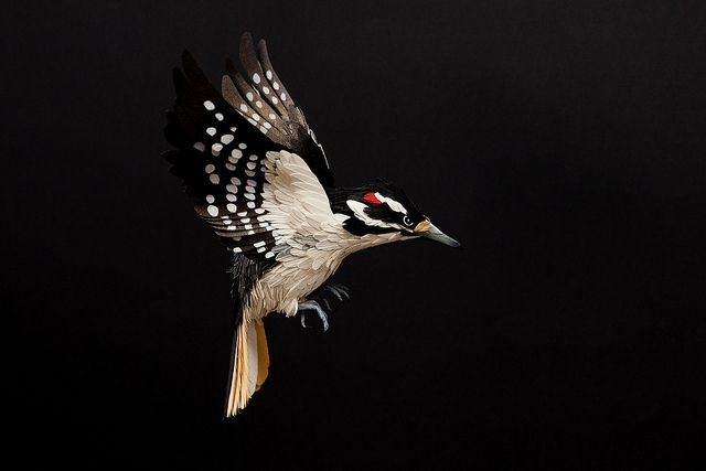 Paper birds - Florida