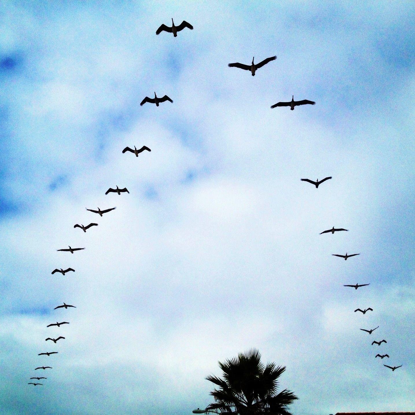 صور عن هجرة الطيور في سرب طيور مهاجرة روعة ميكساتك