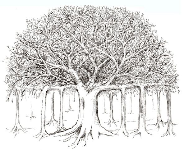 Banyan Tree Sketch Colouring Pages Tree Drawing Tree Tattoo Art Tree Sketches