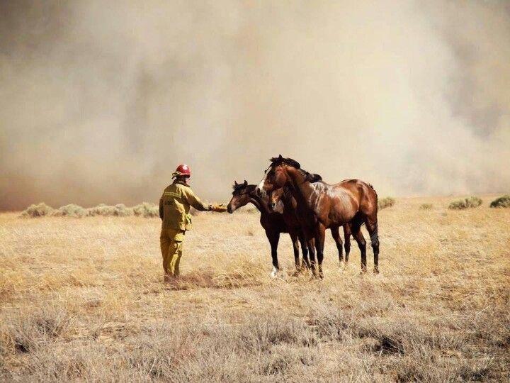 Fireman rescues horses today in LA county.  Powerhouse fire.  6-3-13