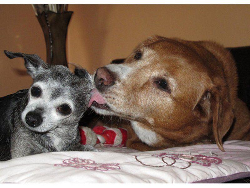 Best Friends Fur-ever