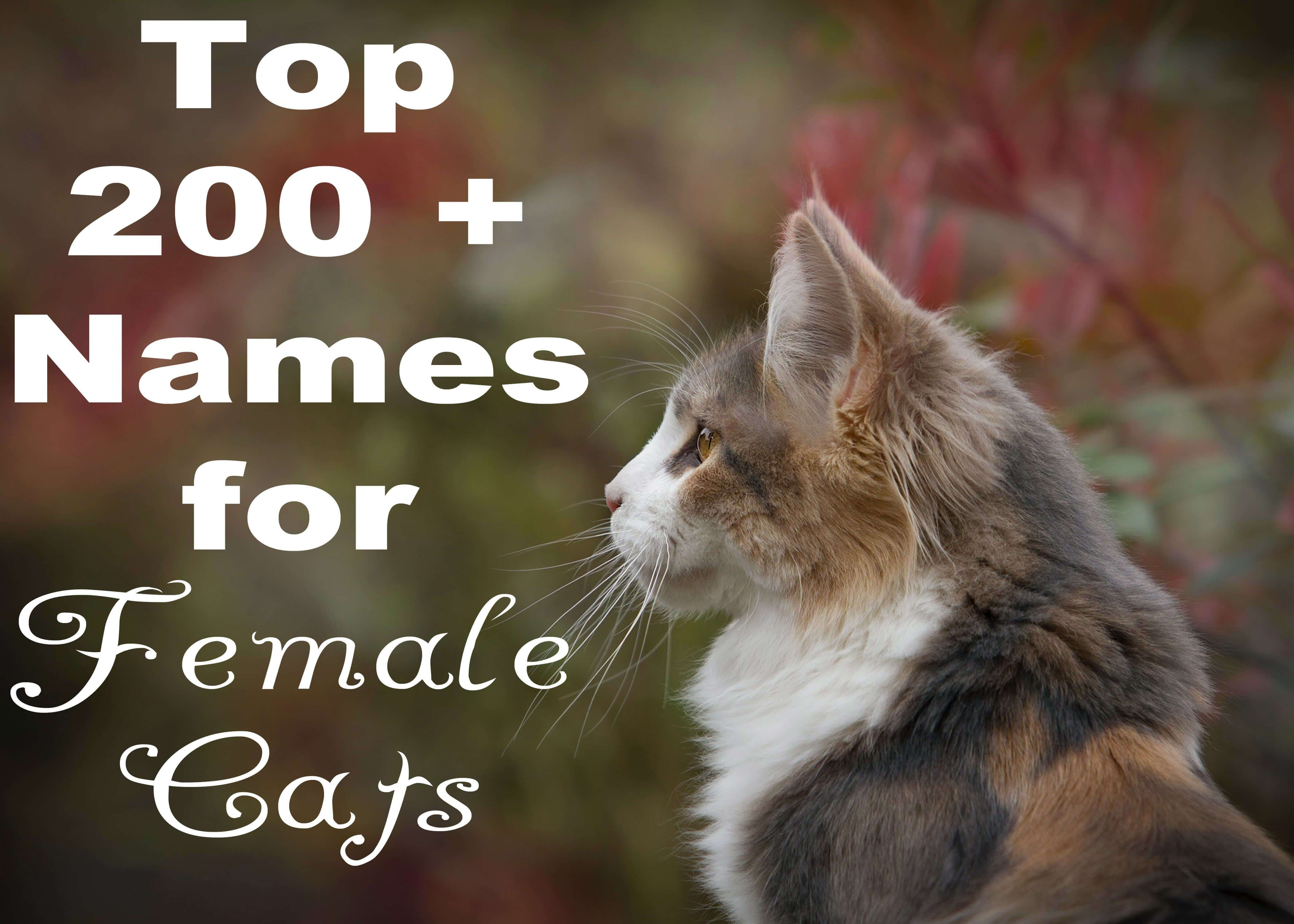 what is female cat called in english
