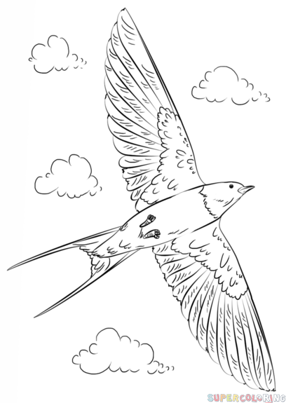 How To Draw A Barn Swallow Step By Step Drawing Tutorials For