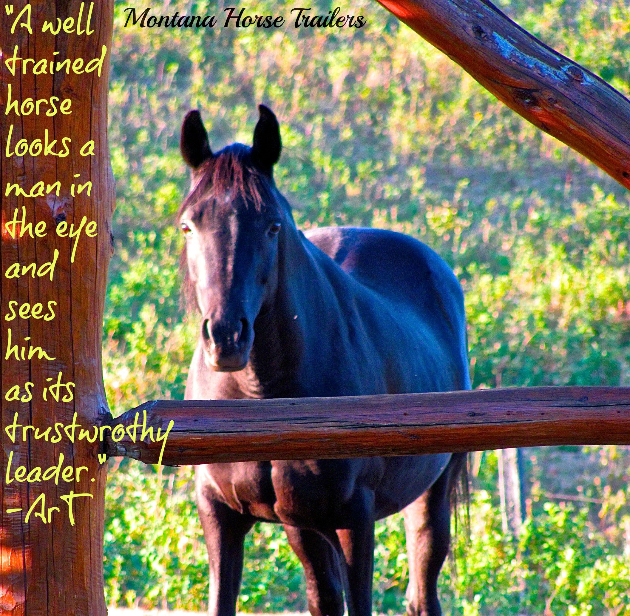 When A Horse Looks You In The Eye Montana Horse Trailers Horse Quotes Beautiful Horses Equine Quotes