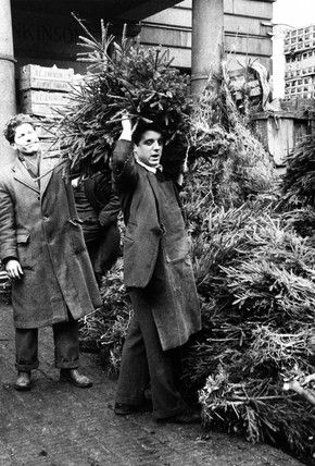 Christmas trees in Covent Garden Market  1952 Christmas Past