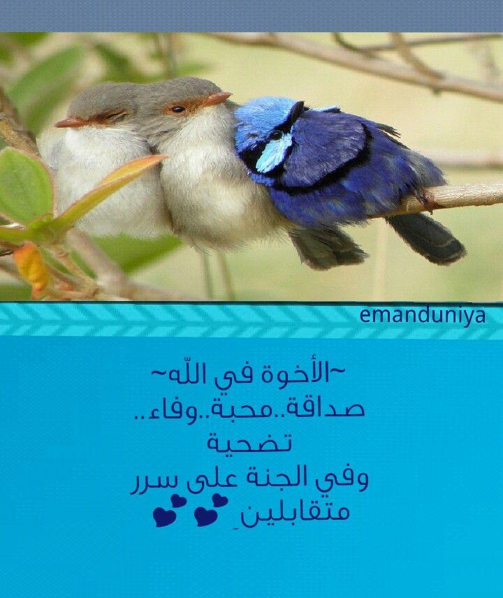 الأخوة في الله Quotes Always And Forever Islam
