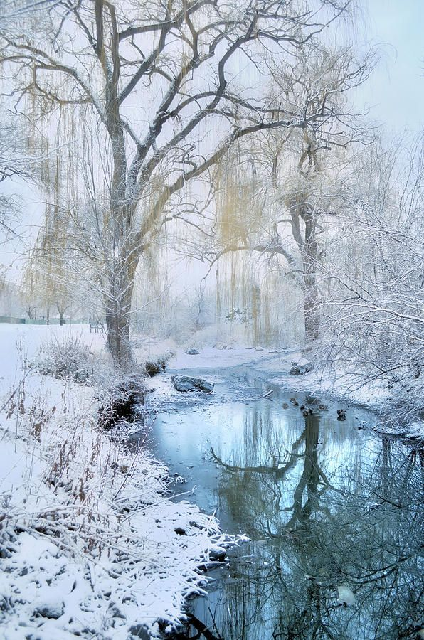 Winter Reflections In Blue by Tara Turner