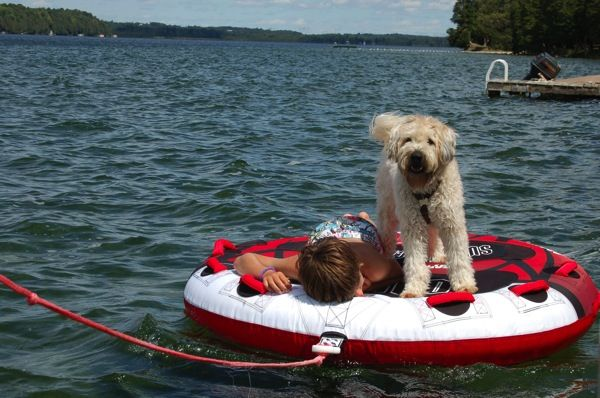 Farley S Friday Can Dogs Go Tubing Dogs Pets Kinds Of Dogs