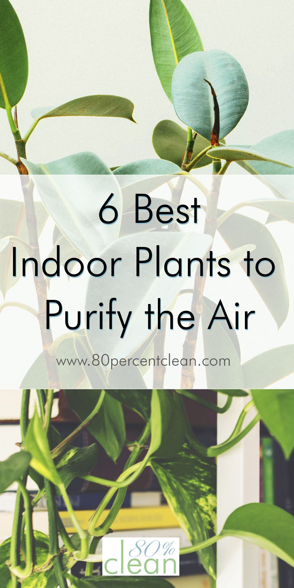 Feeling like your indoor air is a little stale? Need a winter refresh for your home? Try out a few of these indoor plants to purify the air in your home for a taste of spring in the middle of winter, without expensive air purifiers or toxic chemical sprays.