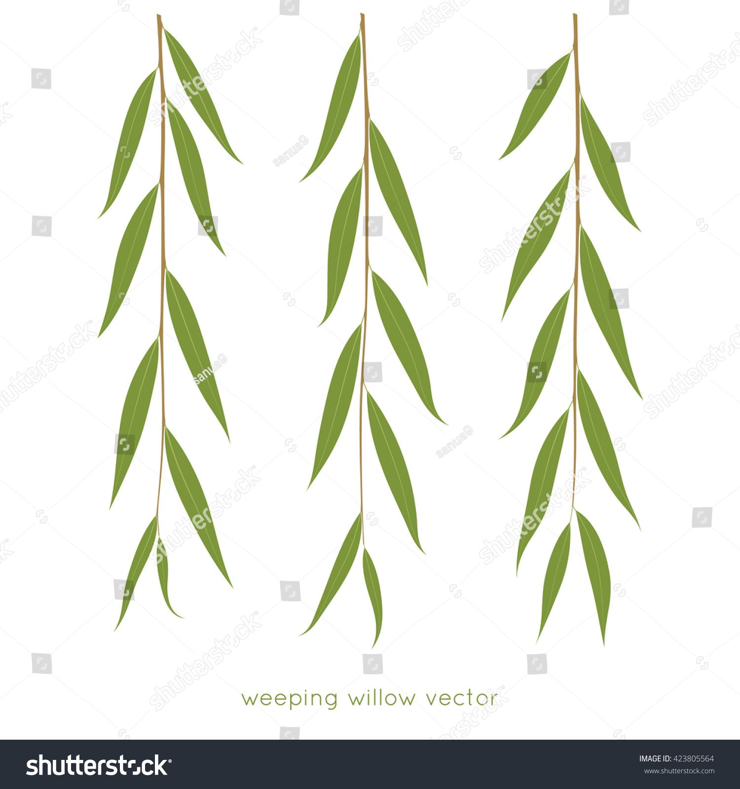 Weeping Willow Twigs Tree Branches Various Leaves Shape Isolated Vector Illustration Weeping Willow Tattoo Weeping Willow Willow Leaf,Best Cheap Champagne For Wedding Toast